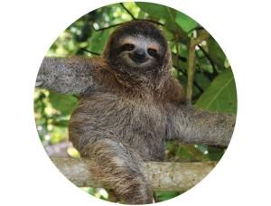 slothcircle